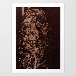 Botanicus (34) Art Print