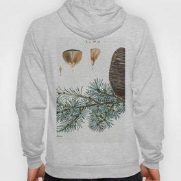 Cedar of Lebanon (Abies cedrus) from Traite des Arbres et Arbustes que lon cultive en France en plei Hoody