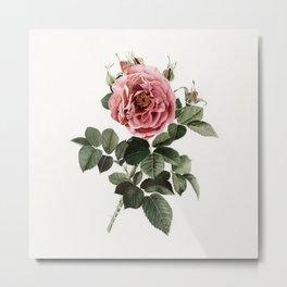 Dusty English Red Rose Metal Print