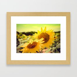 Yellow Summer Sunflower Framed Art Print