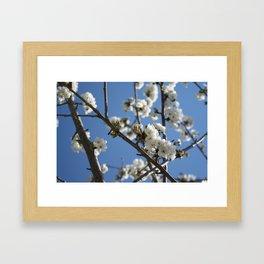 Cherry Blossom Branches Against Blue Sky Framed Art Print