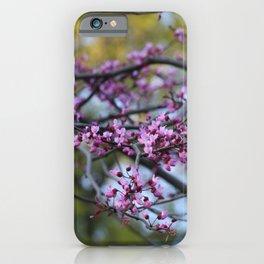 Eastern redbud cascade iPhone Case