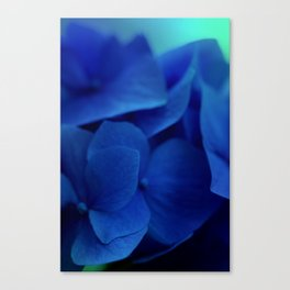 Bluest Blue Flower Canvas Print