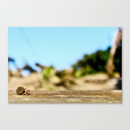 Journey of the Hermit Crab Canvas Print