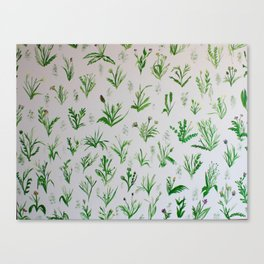 Various Plants and Weeds Canvas Print