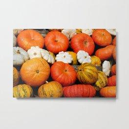 White ,yellow and orange pumpkins-decorative Metal Print