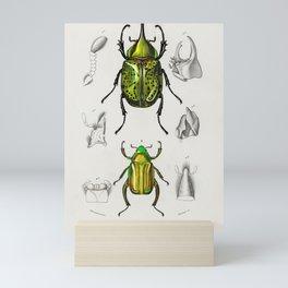 Chrysina Macropus (Chrysophora Macropa) and Eastern Hecules Beetle (Scarabaeus Hyllus) illustrated b Mini Art Print