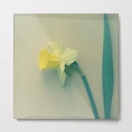 Rustic Daffodil Botanical photograph print; soft yellow lemon yellow bloom Metal Print