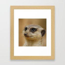 Meerkat 2014-1102 Framed Art Print