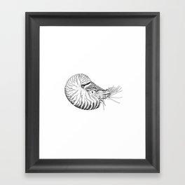 Nautilus Framed Art Print