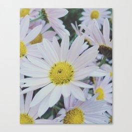 Daisy dream Canvas Print