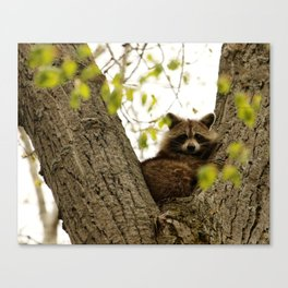 Happy in her hideout Canvas Print