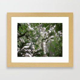 Rainforest from below Framed Art Print