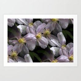 the smell of spring -2- Art Print