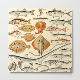 Vintage Fishing Diagram // Poissons by Adolphe Millot XL 19th Century Science Textbook Artwork Metal Print
