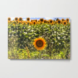 The Lonesome Sunflower Metal Print