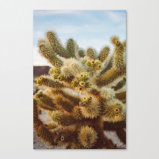 Cholla Cactus Garden IV Canvas Print