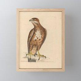 Wood Buzzard, falco buteo15 Framed Mini Art Print
