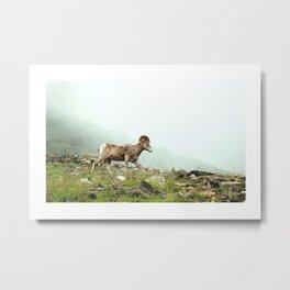 Mountain Ram Metal Print