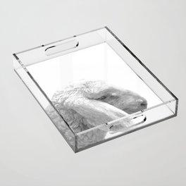 Black and White Sheep Acrylic Tray