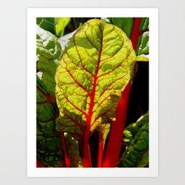 Colorful chard Art Print