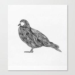 Pajaro Canvas Print