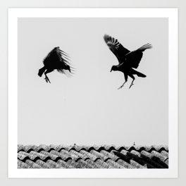 fighting buzzards Art Print