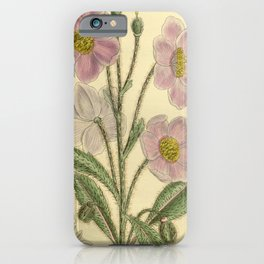 Flower 8568 meconopsis rudis iPhone Case