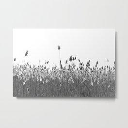 Without A Breeze Metal Print