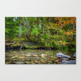 Morning in the Hoh Rain Forest 2 Canvas Print
