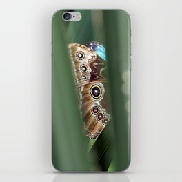 Hiding Butterfly 1 iPhone Skin