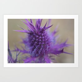 Purple Explosion Art Print