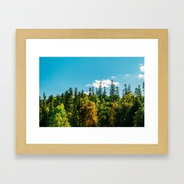 Carpathian Mountains Landscape, Summer Landscape, Transylvania Mountains, Forests Of Romania Framed Art Print