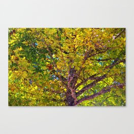 Spectacular View Canvas Print