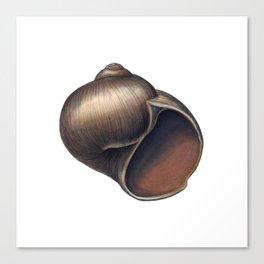 Moon Snail Canvas Print