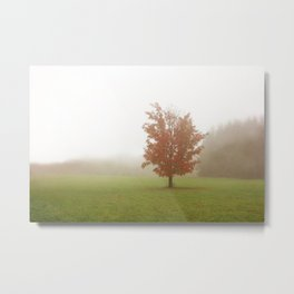 Maple Tree in Fog with Fall Colors Metal Print