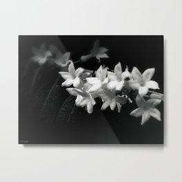 Black and White Jasmine Flowers Photo Metal Print