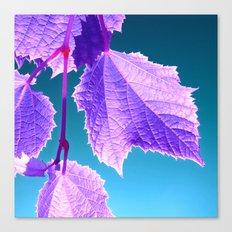 purple wine leaf Canvas Print