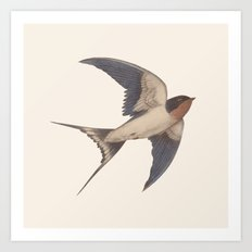 Barn Swallow Art Print