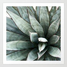 Botanical Succulents // Dusty Blue Green Desert Cactus High Quality Photograph Art Print