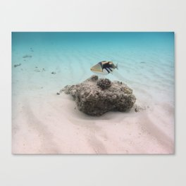 Tropical Maldives White Sand Lagoon Coral Fish Canvas Print