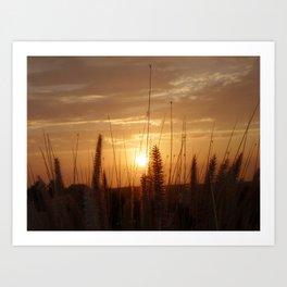 Sunset in Fallbrook Art Print