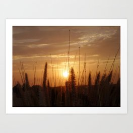 Sunset in Fallbrook Art Print