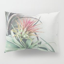 Air Plant Collection II Pillow Sham