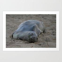 Monk Seal Resting on Beach Art Print