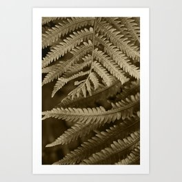 Copper Penny Ferns Glisten Art Print