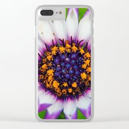 OSTEOSPERMUM 'Margarita White Spoon' Clear iPhone Case