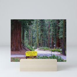 McKinley Grove Botantical Area, Sierra National Forest, California Mini Art Print