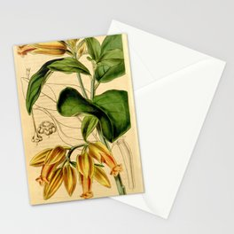 Flower 4118 juanulloa parasitica Parasitic Juanulloa1 Stationery Cards