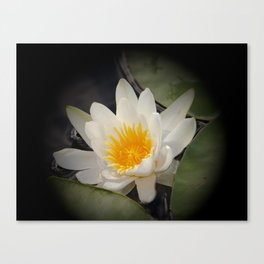 White Waterlily On A Dark Background #decor #society6 Canvas Print